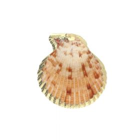 Shell with gold decoration / pendant / light brown / 49x44x8mm / 1pcs