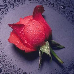 Diamond painting / mosaic / rose / 20x25cm / 1pcs
